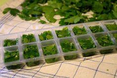 Comment congeler les herbes aromatiques : persil, menthe, coriandre ...