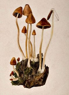 Beatrix Potter, Mushroom Expert | Mental Floss http://mentalfloss.com/article/66248/beatrix-potter-mushroom-expert