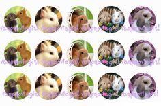 Bunnies Bottle Cap Images