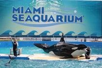 Tweeters Get An Answer To The Question 'Where Is Lolita?'