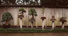Bonsai trees. bc when i hear anything about them im think of saved by the bell.