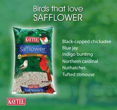 You'll attract a variety of birds when you use safflower seeds. Wild Bird Feeders, Northern Cardinal, Bird Food, Backyard Birds, Blue Jay, Wild Birds, Bees, Butterflies, Gardening