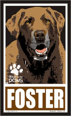 Foster!  Dogs for the paws