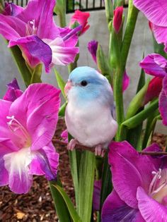 What a fabulous photo of a cute little bird and beautiful flowers!