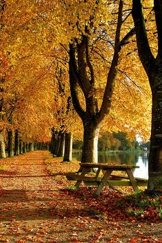Autumn Loudéac, Bretagne, France - Fall, my favorite! Beautiful World, Beautiful Places, Beautiful Pictures, Autumn Scenes, Fall Pictures, Autumn Leaves, Golden Leaves, Autumn Rain, Fall Trees