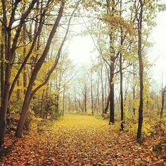 Photo by Bruce . fall in Cambridge Ontario Canada Cambridge Ontario, Fall Season, Country Roads, Canada, Seasons, Autumn, Fall, Fall, Seasons Of The Year