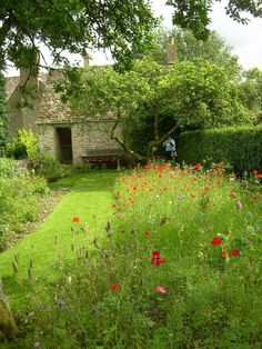 Do you fancy a mini meadow garden? I've seen several beautiful strips of wildflower meadow in show gardens this year. And also in friends' gardens. Ever since the 2012 London Olympics, meadow gardens have been.