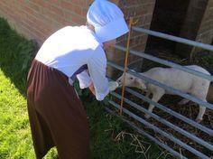 Tudor lamb feeding!