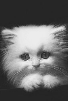 """Beautiful Baby (Animal Planet) ❤❦♪♫Thanks, Pinterest Pinners, for stopping by, viewing, re-pinning, & following my boards. Have a beautiful day! ^..^ and """"Feel free to share on Pinterest ♡♥♡♥ #catsandme ❤❦♪♫!♥✿´¯`*•.¸¸✿♥✿´♥✿´¯`*•.¸¸✿♥✿"""