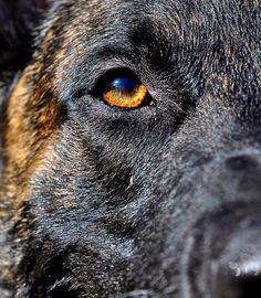 police dog photography
