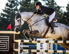 Horse at Menlo 2 by ~rainyrose23