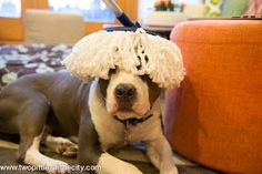 Two Pitties in the City: DoggyStyle: Mopping a Dog Home (The One That Finally Works!)