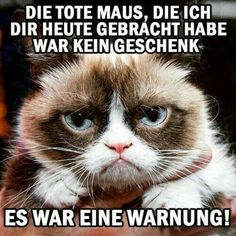 New memes graciosos humor grumpy cat Ideas Funny Cats, Funny Animals, Cute Animals, Funny Mouse, Grumpy Cat, Funny Animal Pictures, Funny Images, Dead Mouse, Mean Cat