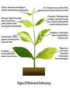 Plant Nutrient Deficiency Symptoms - great graphic.