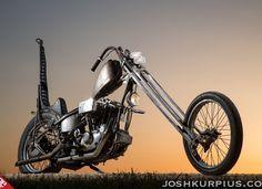 The Locust by Josh Kurpius
