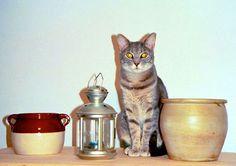 Kitty, Comics, Cats, Animals, Decor, Little Kitty, Gatos, Animales, Decoration