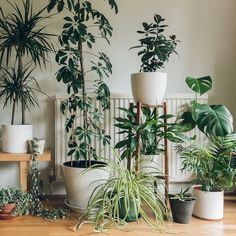 We've been thinning out the plants a little... - - - #Haarkon #Houseplants #planthunter #houseplant #haarkonhouse #indoorplants #umbrellaplant #monstera #greenhouse #urbanjungle #urbanjunglebloggers #jungalowstyle #crazyplantlady #plant #plants #plantgang #plantgoals #botanical #botanicalpickmeup #smalltree #interiorstyling #botanicalstyling