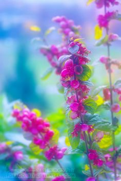 Gorgeous Bokeh photograph and colors