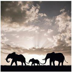 Bild mit Elefanten - http://stylefru.it/s57369