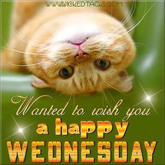 Happy Wednesday Funny Sayings | Happy Wednesday Image | Happy Wednesday Picture Code