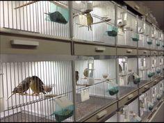 bird breeding cages