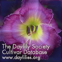Daylily Dress Blues