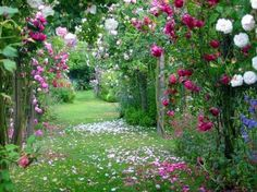 Roses in the Jardin de Greignac ?•?.•