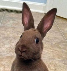 """When your best friend gets back together with her boyfriend for the seventh time and swears that """"this time is different.""""   21 Bunny Reactions For Everyday Situations"""