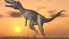 Dinosaurs didn't live in the ocean. So, how did these dinosaur bones get here? Marine Iguana, Marine Fish, Dinosaur Bones, Dinosaur Fossils, Sea Dinosaurs, Species Of Sharks, Western Michigan, Science News, Vertebrates