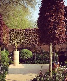 The most popular varieties used for stilted hedges in the U.K. are beech (Fagus sylvatica) and hornbeam (Carpinus betulus),