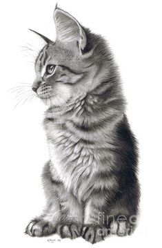 "Pencil Drawings Whistful"" - drawing by Karen Hull - Whistful Art Print by Karen Hull. All prints are professionally printed, packaged, and shipped within 3 - 4 business days. Choose from multiple sizes and hundreds of frame and mat options."