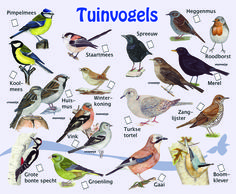zoekkaart vogels Animals Of The World, Animals And Pets, Beautiful Birds, Animals Beautiful, Sensory Garden, Bird Poster, Sea Fish, Fauna, Wild Birds