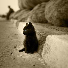 black cats. always misunderstood
