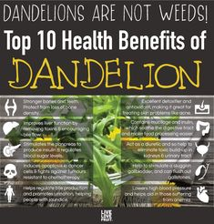 After reading these top health benefits of dandelion, you'll start picking them from your yard to use medicinally instead of destroying them with sprays. #dandelionhealthbenefits #healthbenefits #healthbenefitsofdandelion #naturalmedicine #dandelions #nutrition #herbalism #dandelionroot
