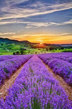 Fields flowers ~ Dreamy Nature