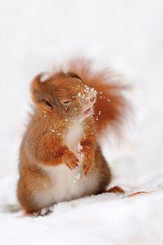 squirrel | substanzlos