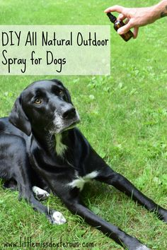"e outdoors ""annoyance free"" with this DIY Natural Outdoor Spray for Dogs.This natural blend allows pups to run free & not be bothered with bites or buzzes. Dog Anxiety, Natural Cleaners, Green Life, Young Living Essential Oils, Life Is Good, Pup, Easy Diy, Dogs, Nature"