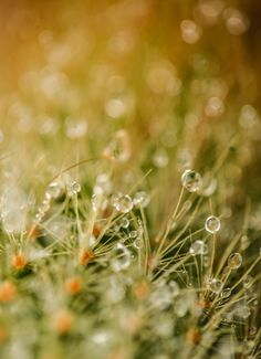 Dewdrop - OGQ Backgrounds HD
