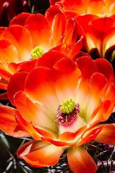 macro de flor rojiza