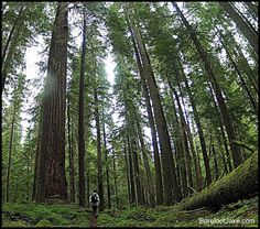 Blog:  Backpacking the whole Elwha River Valley.  From Traihead to Basin
