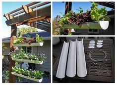 Horta vertical suspensa em calhas de PVC