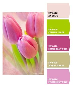 Paint colors from Chip It! by Sherwin-Williams - so cute for a little girls room
