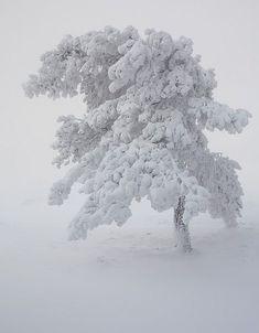 so beautiful / winter tree snow Winter Szenen, I Love Winter, Winter Magic, Winter White, Winter Christmas, Winter Trees, Snow White, White On White, Snowy Trees
