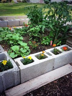 @Botanical Interests @BG_garden Here are some not so bad shots of my raised beds last yr. first attempts & I loved it pic.twitter.com/3AsiCkHtZ0