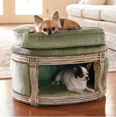 Little over the top as shown here, but it's a cute idea for small dogs.  I think Frodo and Boris would love it.