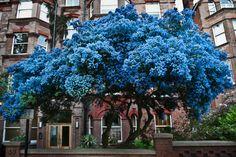 A Seussian tree