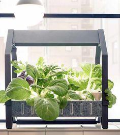 Tendance jardin pour l'intérieur: cultiver dans l'eau… (Femmes d'Aujourd'hui)