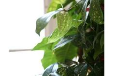 How to Grow a Pothos Faster (6 Steps) | eHow