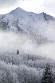 Snow-covered peak and trees, outside Crested Butte, Colorado