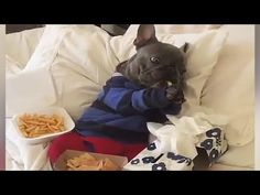 This Rescue Piglet Befriends A French Bulldog Puppy | Youtube animal ...
